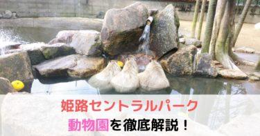 姫路セントラルパーク ドライブサファリ・ウォーキングサファリ動物園を解説