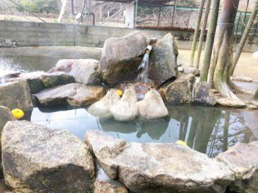 姫路セントラルパーク ドライブサファリウォーキングサファリ動物園詳細